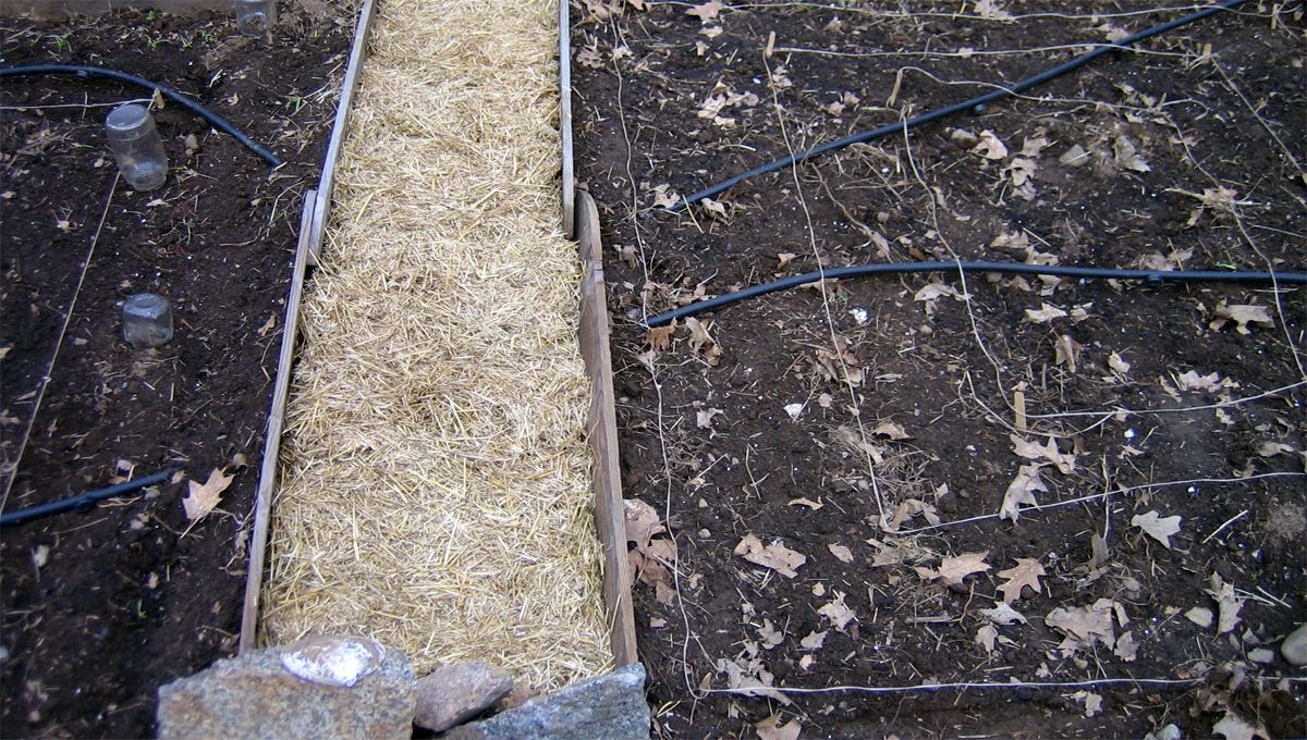 Sowing seeds outdoors
